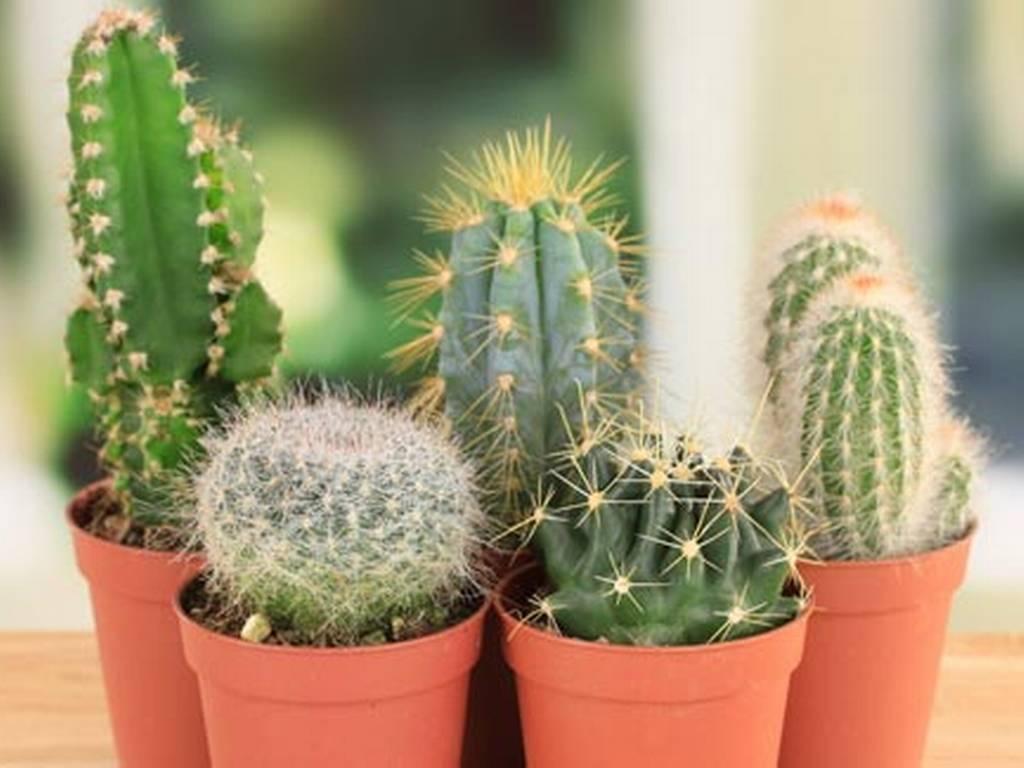 Atraer la energ a positiva con plantas fitdomilife for Plantas decorativas para el hogar